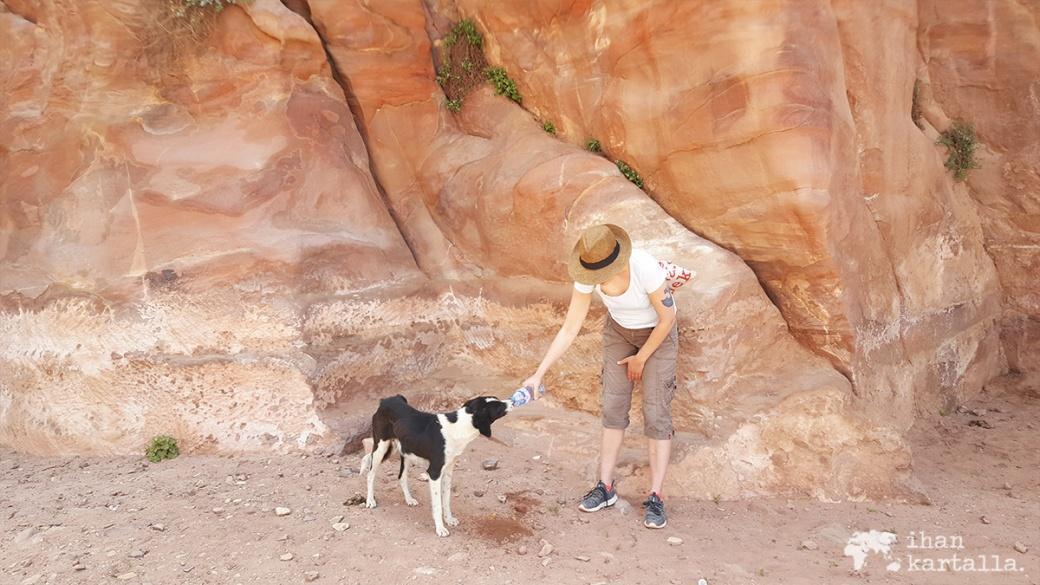 4-4-jordan-petra-dog