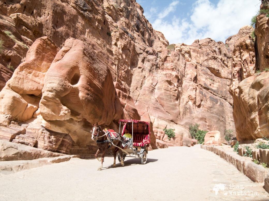 4-4-jordan-petra-siq-horse